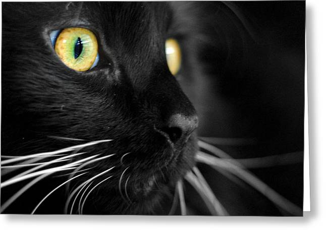 Cat Greeting Cards - Black Cat 2 Greeting Card by Craig Incardone