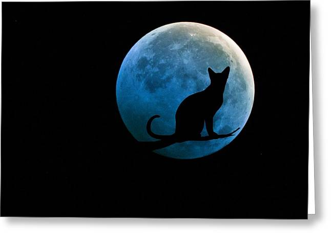 Black Cat And Blue Full Moon Greeting Card by Marianna Mills