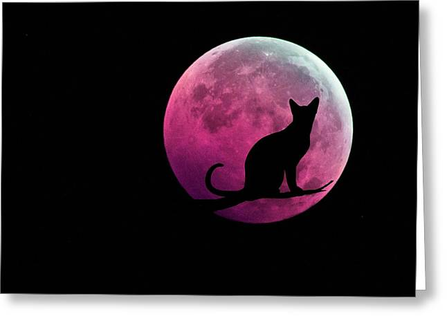Black Cat And Pink Full Moon Greeting Card by Marianna Mills