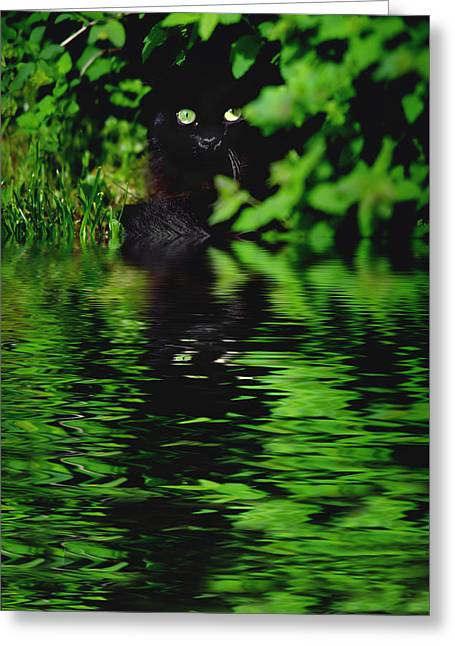 Sit-ins Greeting Cards - Black Cat Greeting Card by Heinz Dieter Falkenstein