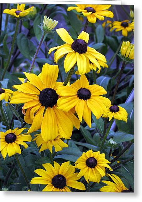 Fall Colors Greeting Cards - Black Eyed Susan Flowers in Alaska Greeting Card by Connie Fox
