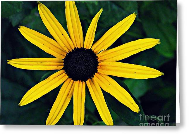 Black-eyed Susan Greeting Card by Sarah Loft