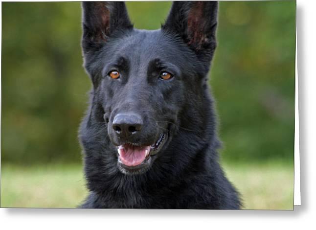 Black German Shepherd Dog Greeting Card by Sandy Keeton