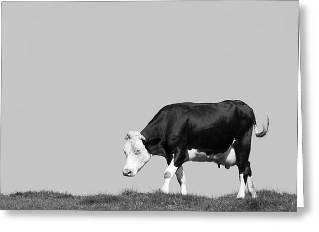 Lonesome Greeting Cards - Black Hereford Greeting Card by Wim Lanclus