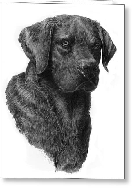 Black Lab Head Study 2 Greeting Card by Laurie McGinley
