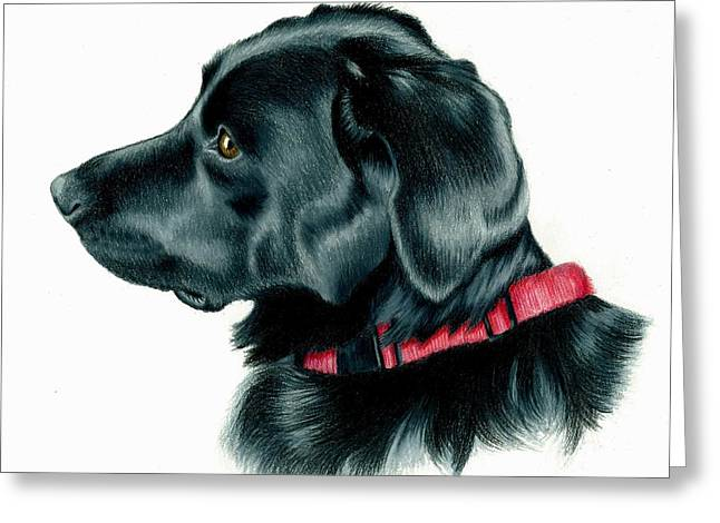Breed Of Dog Drawings Greeting Cards - Black Lab with Red Collar Greeting Card by Heather Mitchell