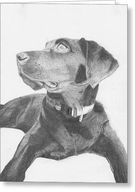 Labrador Greeting Cards - Black Labrador Retriever Greeting Card by David Smith