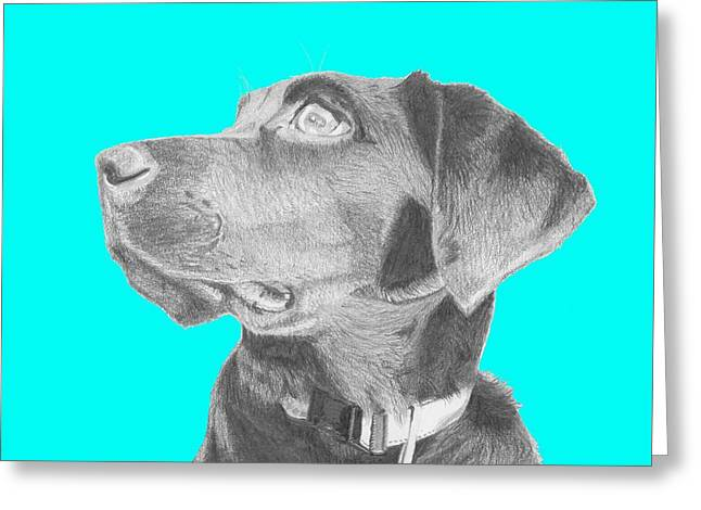 Black Labrador Retriever In Blue Headshot Greeting Card by David Smith