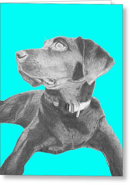 Retriever Greeting Cards - Black Labrador Retriever With Blue Background Greeting Card by David Smith