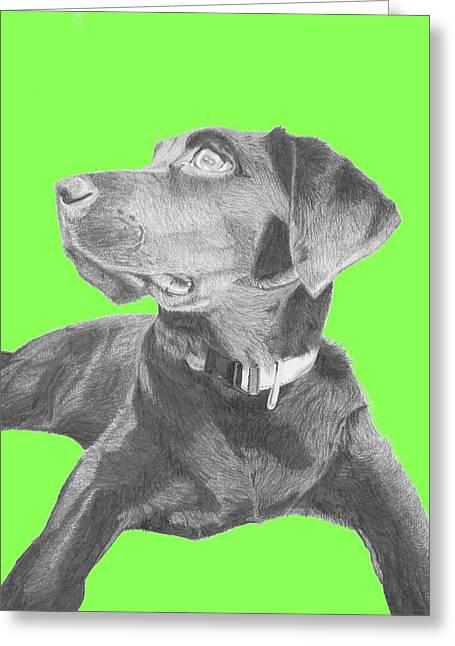 Black Labrador Retriever With Green Background Greeting Card by David Smith