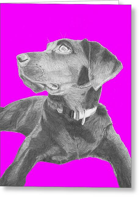 Retriever Greeting Cards - Black Labrador Retriever With Pink Background Greeting Card by David Smith