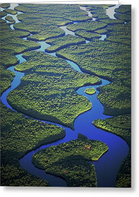 Mangrove Forest Greeting Cards - Black mangrove islands Greeting Card by Michael Turco