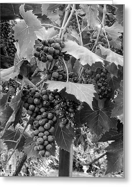 Viticulture Digital Greeting Cards - Black or White Grapes Greeting Card by Dorothy Berry-Lound