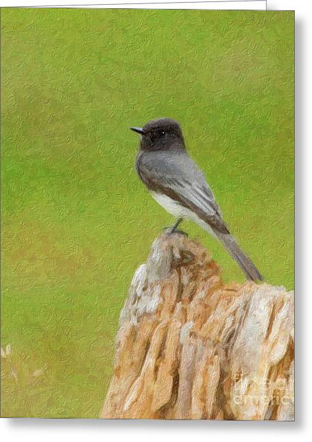 Phoebe Greeting Cards - Black Phoebe Greeting Card by Betty LaRue