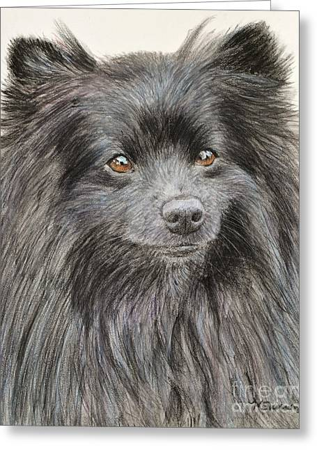 Doggy Pastels Greeting Cards - Black Pomeranian Painting Greeting Card by Kate Sumners