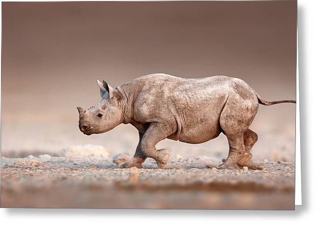 Endangered Species Greeting Cards - Black Rhinoceros baby running Greeting Card by Johan Swanepoel