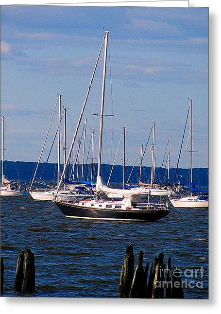 Sailboat Art Greeting Cards - Black Sailboat Greeting Card by Colleen Kammerer