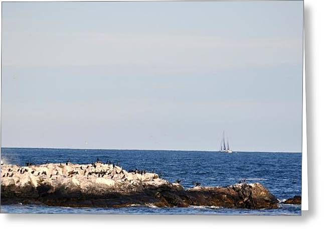 Ocean Sailing Greeting Cards - Black Sea Birds Greeting Card by DeTerra Photography