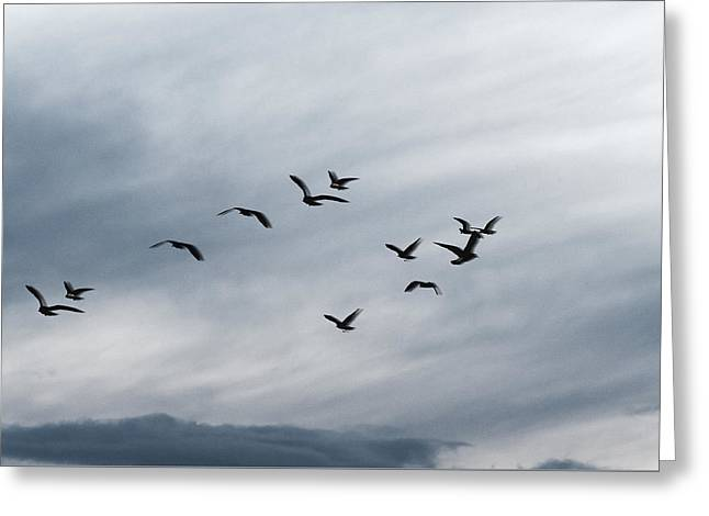 Flying Seagull Greeting Cards - Black Seagulls Greeting Card by Marcus Karlsson Sall
