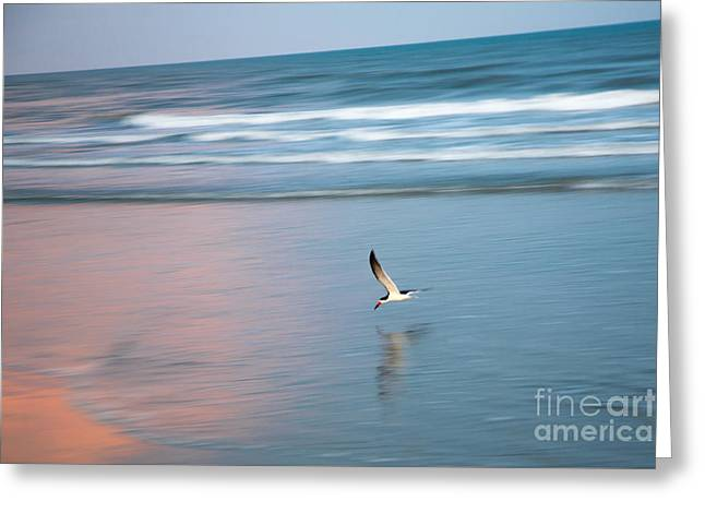 Ocean. Reflection Greeting Cards - Black Skimmer at Sunset Greeting Card by Andy Miller