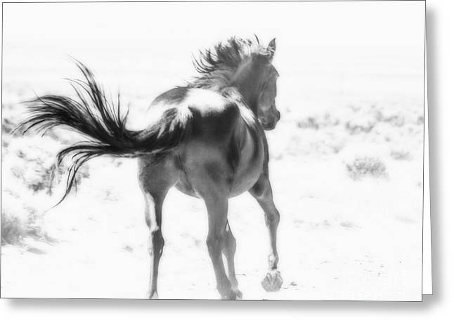 Printed Greeting Cards - Black Stallion Wild Horse Greeting Card by Jerry Cowart