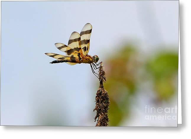 Flying Animal Greeting Cards - Black Stripe Dragon  Greeting Card by Marle Nopardi