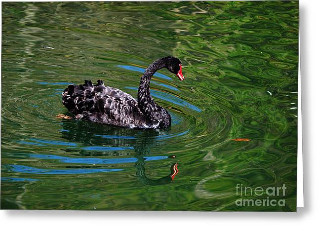 Black Swan Greeting Card by Everette Robinson