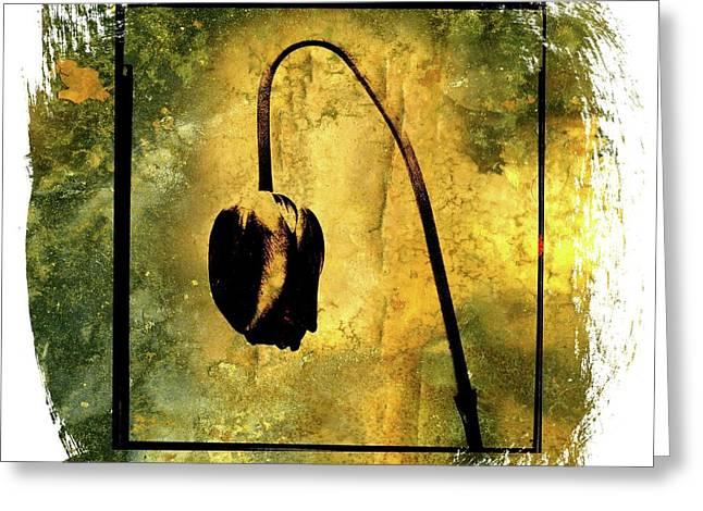 Black tulip Greeting Card by BERNARD JAUBERT