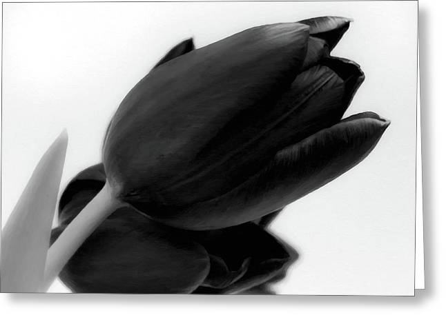 Close Up Floral Greeting Cards - Black Tulips Greeting Card by Wim Lanclus