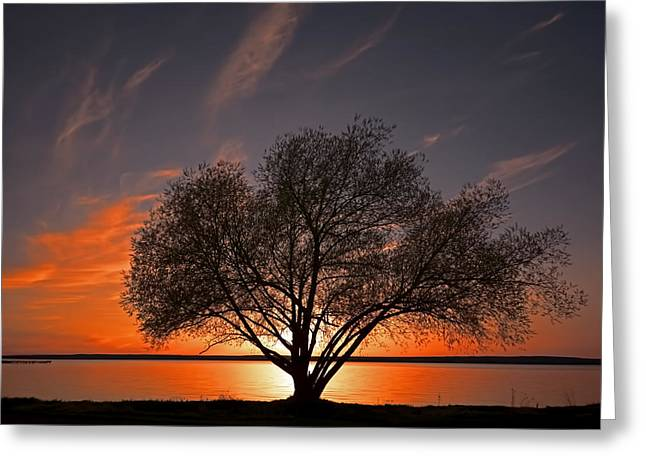 Willow Lake Greeting Cards - Black Willow Greeting Card by John Welling