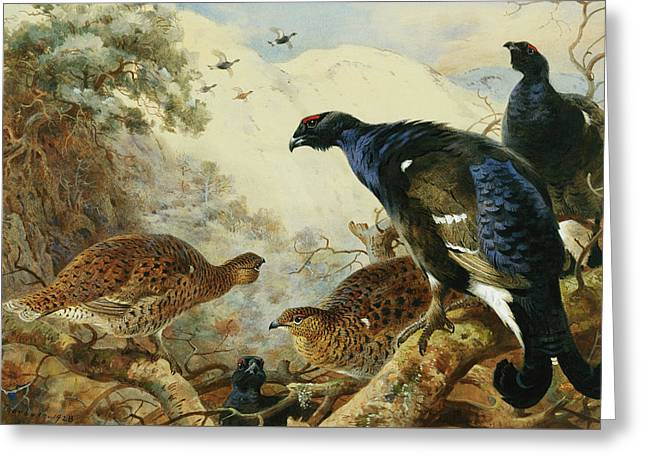 Blackgame Or Black Grouse Greeting Card by Archibald Thorburn