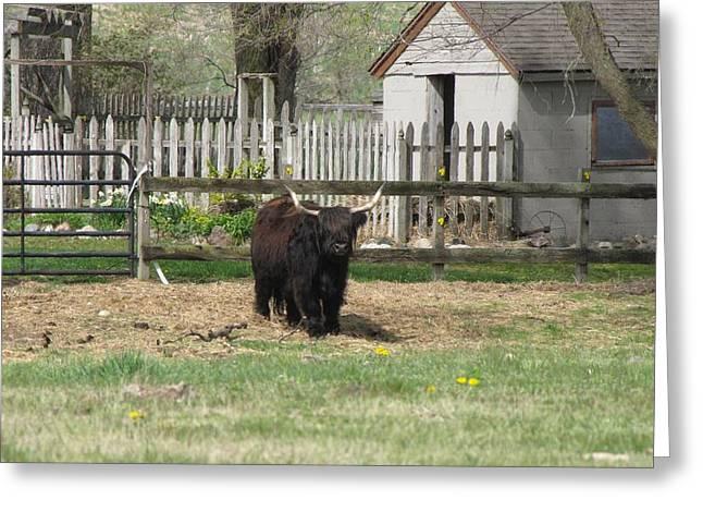 Michigan Farmhouse Greeting Cards - Blackie Greeting Card by Jane Greiner
