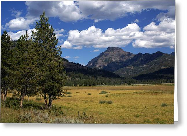 Blacktail Plateau Greeting Card by Marty Koch