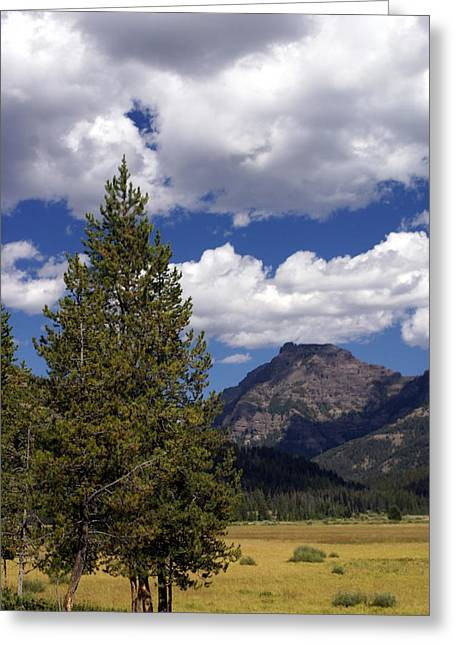 Blacktail Plateau Vertical Greeting Card by Marty Koch