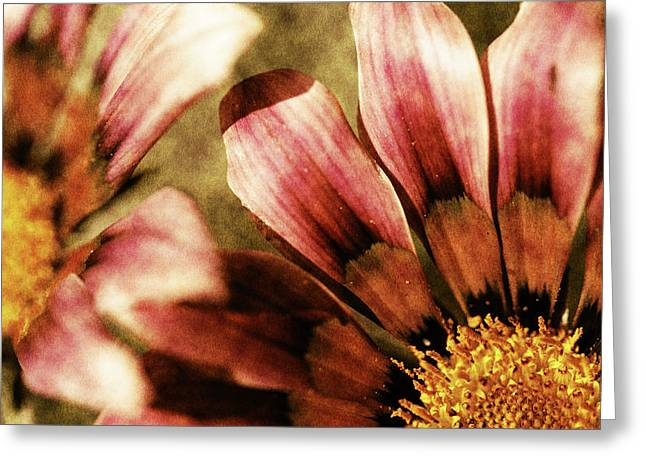 Petal Mixed Media Greeting Cards - Blanket Flowers Greeting Card by Bonnie Bruno