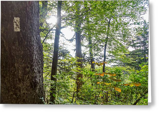 Mccoy Greeting Cards - Blaze at the Appalachian Trail Greeting Card by A Different Brian Photography