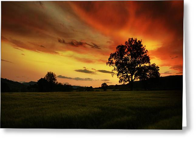 Blazing Skies Greeting Card by Angel  Tarantella