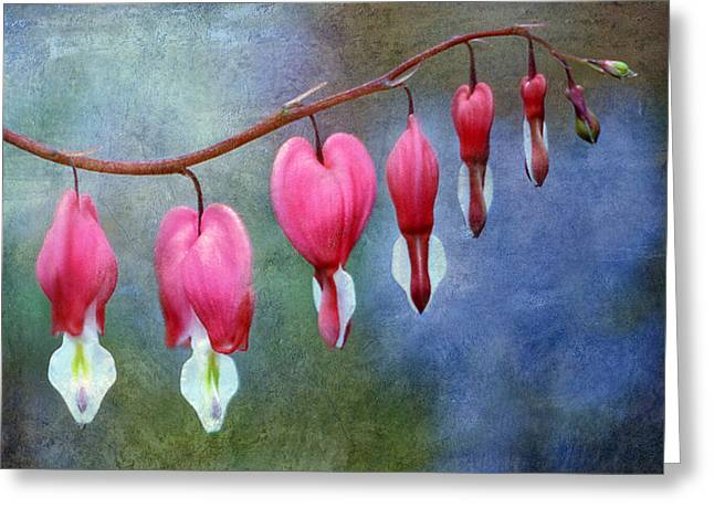 Bleeding Heart Greeting Cards - Bleeding Heart 2 Greeting Card by Marilyn Hunt