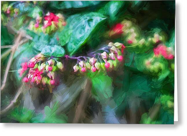 Dicentra Spectabilis Greeting Cards - Bleeding Heart Flowers Clerodendrum Painted 2 Greeting Card by Rich Franco