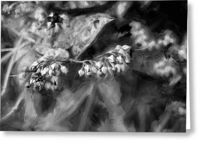 Dicentra Spectabilis Greeting Cards - Bleeding Heart Flowers Clerodendrum Painted BW 1 Greeting Card by Rich Franco