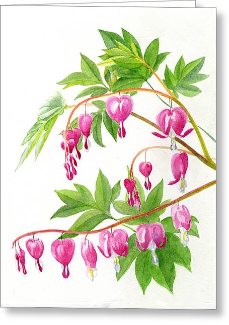 Bleeding Hearts Greeting Cards - Bleeding Hearts #1 Greeting Card by Sharon Freeman