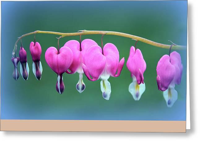 Bleeding Heart Greeting Cards - Bleeding Hearts Greeting Card by Jessica Jenney