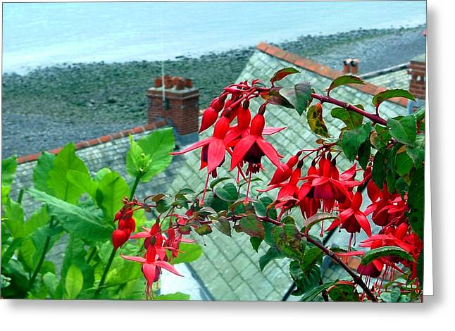 Seaside Digital Greeting Cards - Bleeding Hearts of England Greeting Card by Mindy Newman