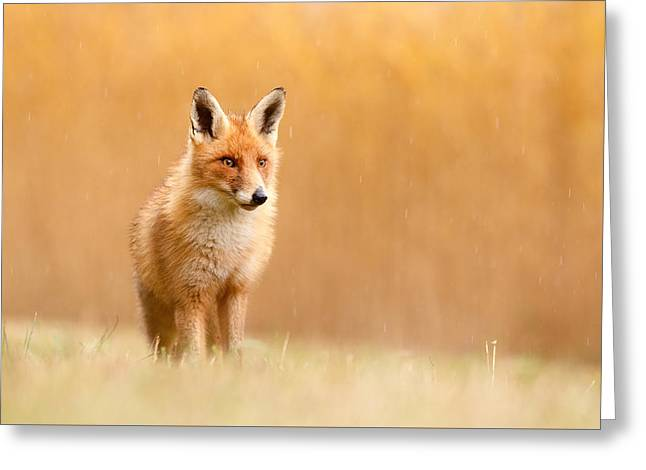 Fox Photographs Greeting Cards - Blending in or Standing Out - Red Fox and Yellow Reed Greeting Card by Roeselien Raimond