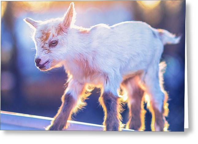 Goat Photographs Greeting Cards - Little Baby Goat Sunset Greeting Card by TC Morgan