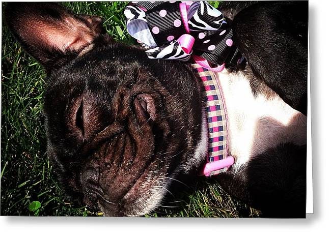 Bulldog Puppies Pictures Greeting Cards - Blissful Frenchie Greeting Card by Bri Lou