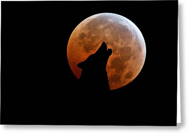 Mystic Sky Art Greeting Cards - Blood Full Moon and the Wolf Greeting Card by Marianna Mills