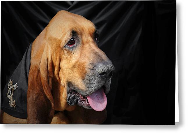 Best Friend Photographs Greeting Cards - Bloodhound - Governed by a world of scents Greeting Card by Christine Till