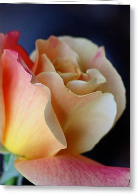 Bloom Greeting Card by KC Moffatt