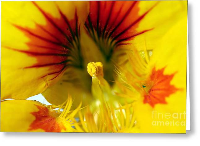 Flower Anthers Greeting Cards - Bloom Greeting Card by Michal Boubin
